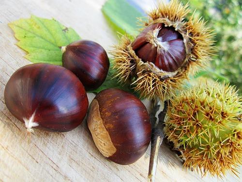 chestnuts-58410_1280.jpg