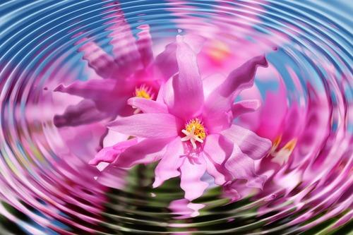 flower-110783_1280.jpg