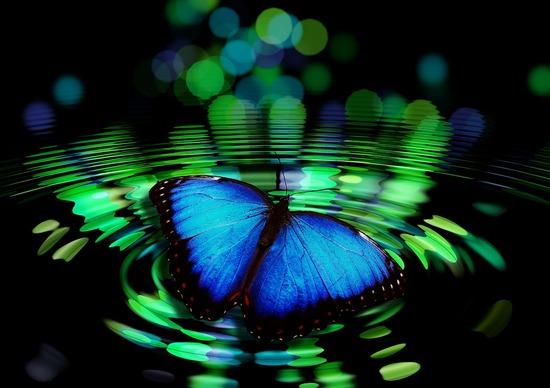 butterfly-492536_1280.jpg
