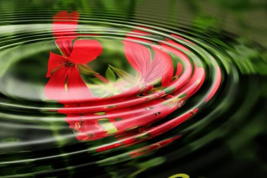 geranium-351810_1280.jpg