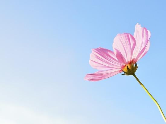 flower-1196301_640.jpg