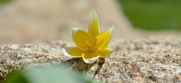 flower-745731_640.jpg