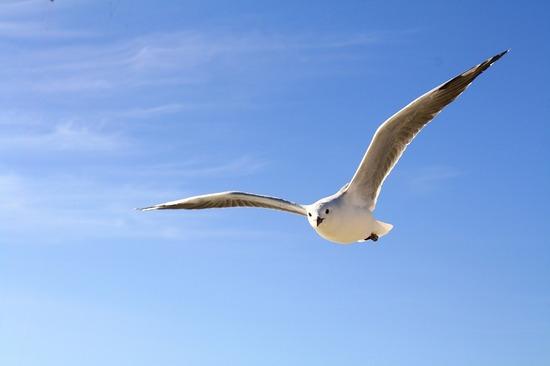 gull-456727_1280.jpg