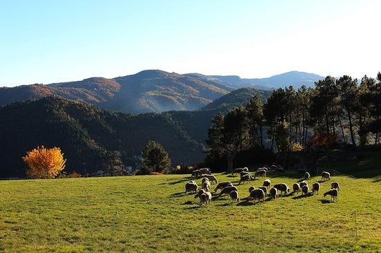 sheep-1239357_640.jpg