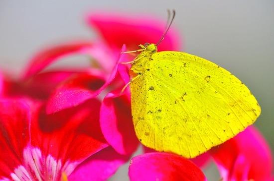 butterfly-3011588_640.jpg