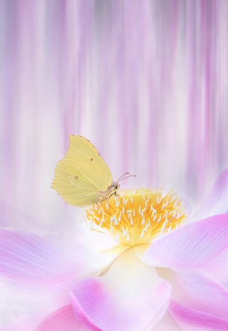 flower-3054800_1280.jpg
